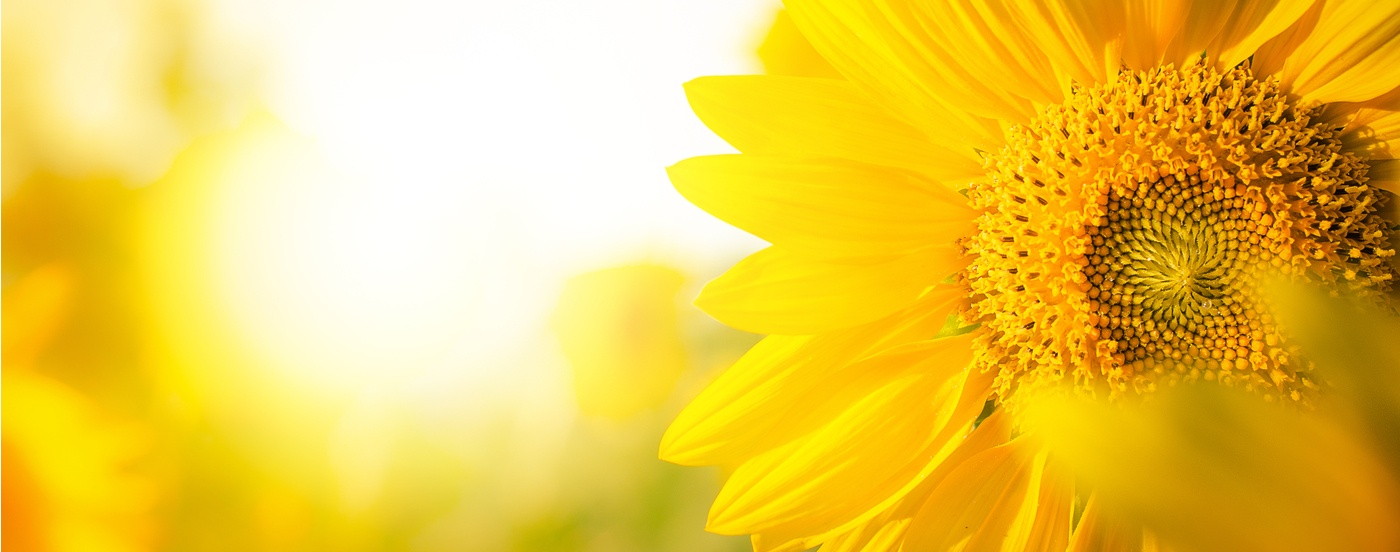 Spring Cleaning for Social: Brighten Your Bio and Make Your Pages Shine